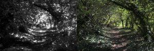 Série de 24 diptyques. Photographies numériques – Tirage encres pigmentaires, dimensions 34 x 101 cm, 7 exemplaires (2017)